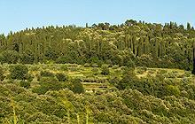 Anello della Riserva Naturale di Montececeri
